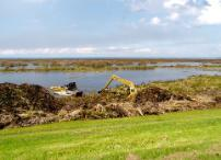 Pushing cattail, uprooted by Hurricane Wilma, to shore for harvesting by track hoe, on the south shore of Lake Okeechobee (2005)