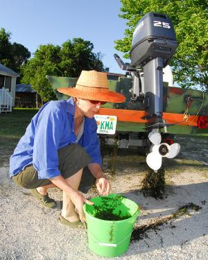 Woman cleans hydrilla from boat rudder